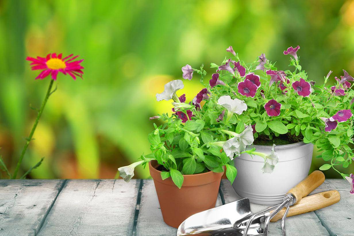 Grow Your Own Garden In a Container